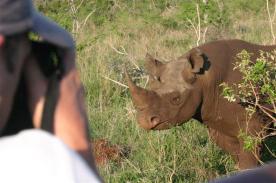 Photographing Black Rhino - Mkhaya