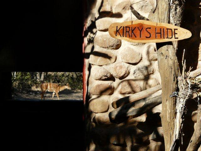 Sightings at Mkhaya Game Reserve's new Hide