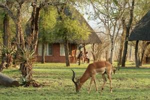 Impala at Wisteria