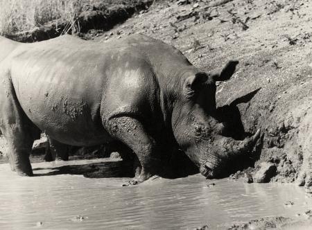 ML SMR 70s Rhino Wallow
