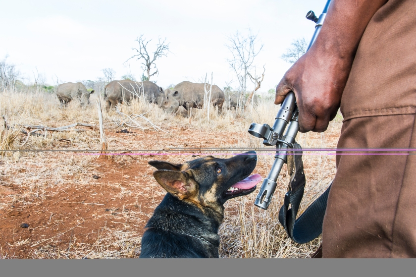Anti-poaching dog patrols and training session